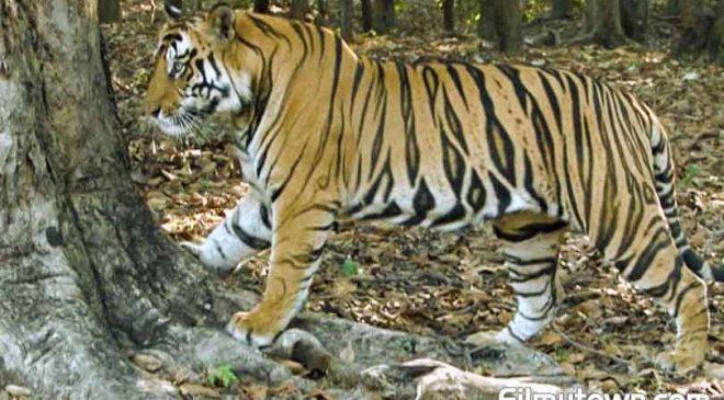 EPIC's shows celebrate wildlife, history of India